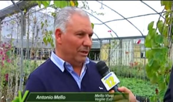 Antonio Mello vivai veglie